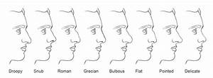 Image Gallery human nose types
