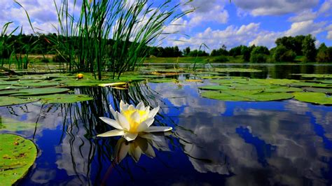 pond background pond wallpapers wallpaper cave