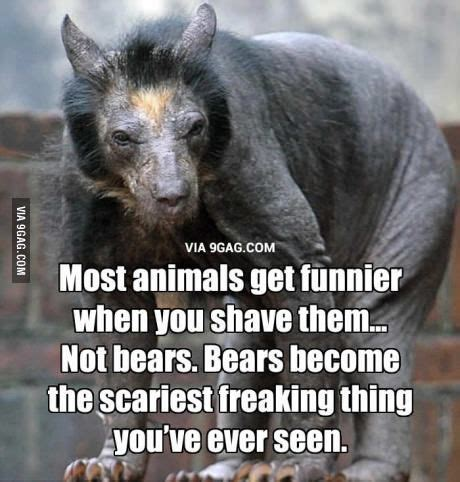 Hairless Bear Meme - so if this is a shaved bear does that mean a chupacabra is a bear with no hair so fuzzy wasn t