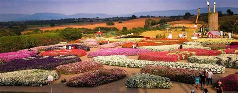 Flora Park Wang Nam Keaw  Flora Fair  Thai 2 Siam