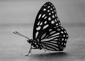 butterfly b&w   I made this picture for the Black and ...