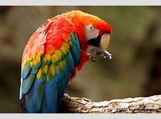 Repoblación de guacamayas en Selva de Palenque