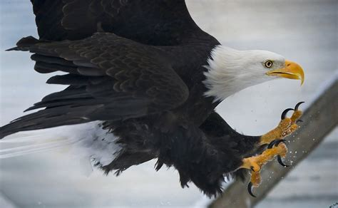 national bird day time to take pride in your birds