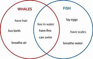 Create Venn Diagram Worksheets
