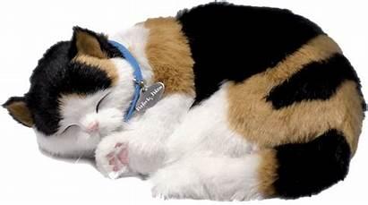 Calico Perfect Petzzz Kitten Cat