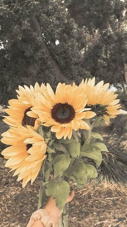 Aesthetic Flower Wallpapers Nature Sunflowers Flowers Sunflower