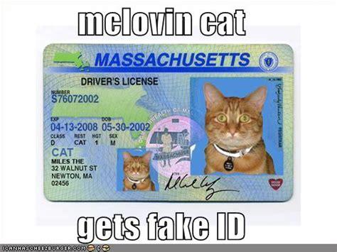 mclovin cat  fake id cheezburger funny memes