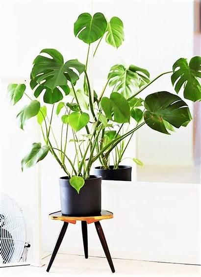 Leaf Uploaded Indoor Plants