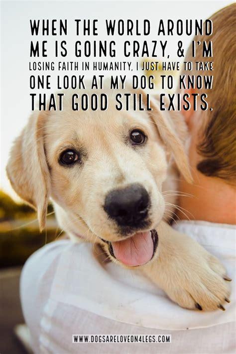 dog quote   world     crazy dog