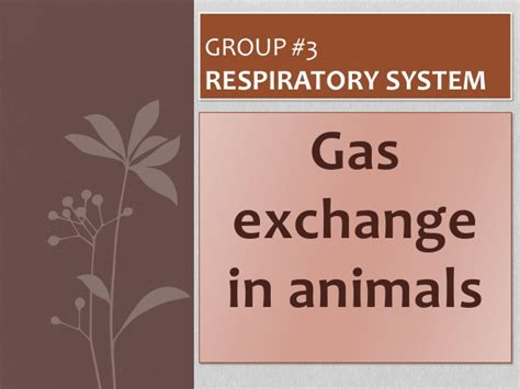 gas exchange  animals