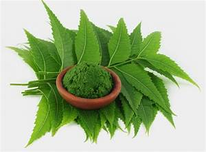 Neem Leaf Powder  U2013 Neoteric India  Online Shopping For Natural Herbs And Grocery