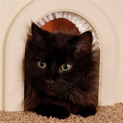20 types of Cat doors   Interior & Exterior Ideas