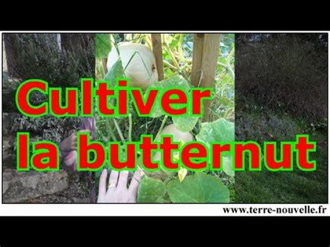 cuisiner la courge butternut comment cultiver la courge butternut