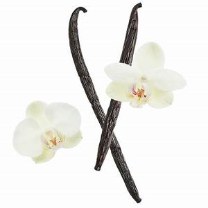 The gallery for --> Vanilla Flower Png
