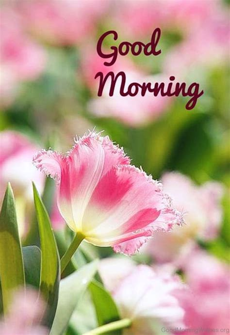 25 Spring Good Morning Wishes