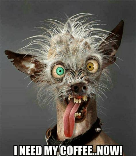 Share the best gifs now >>>. 25+ Best Memes About I Need My Coffee | I Need My Coffee Memes