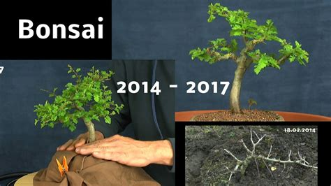 bonsai vom saemling zum bonsai doku youtube