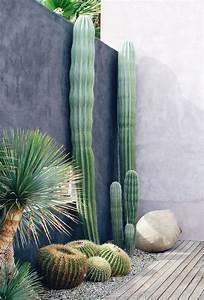 Outdoor, Cactus, Garden, Ideas, For, The, Best, Looking, Landscape
