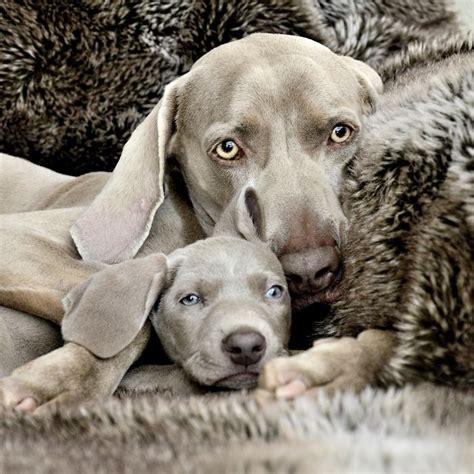 hermosas  tiernas imagenes de perros  sus crias