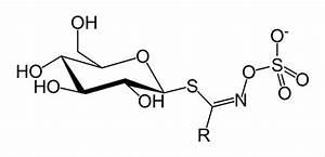 캐나다의 삶 | 양배추, 브로콜리의 항암물질 - 글루코시놀레이트 - Daum 카페