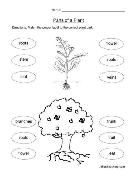 Life Cycle Of A Plant Worksheet Homeschooldressagecom