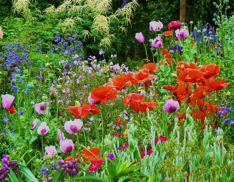 Poppy Cottage Garden Near St Mawes And Places To Stay