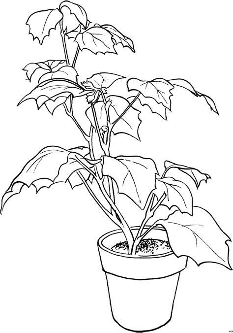 pflanze  kleinem topf ausmalbild malvorlage blumen