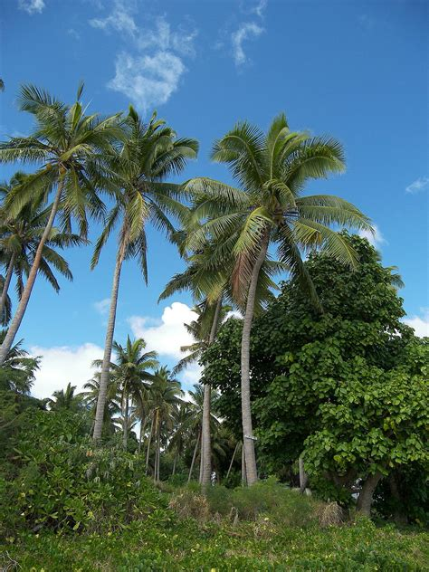 Jungle Palm Trees