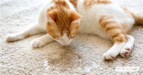 hausmittel gegen katzenurin katzenurin entfernen und geruch vermeiden mit hausmitteln