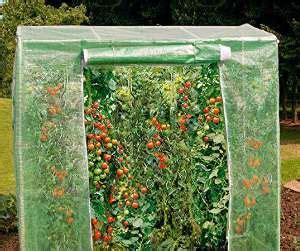 Tomatenhaus Günstig Kaufen Oder Selber Bauen Gewächshaus
