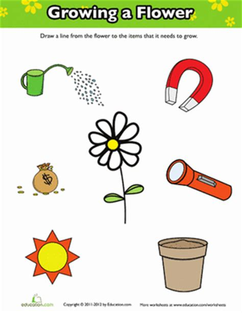 how does a flower grow worksheet education
