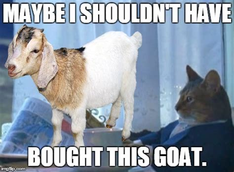 Funny Goat Memes - funny goat isis pictures to pin on pinterest pinsdaddy