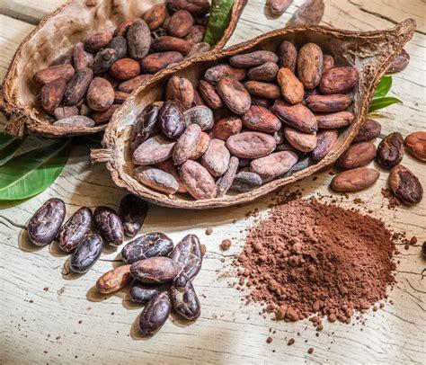 cuisiner les feves cacao cru découvrez ses bienfaits et comment le cuisiner top santé