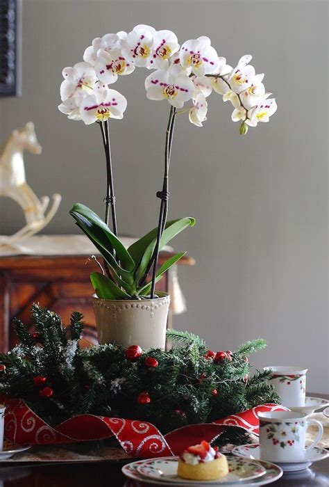 pin by nook and cranny 31 best pin to win it s just that simple images on pinterest indoor house plants orchid