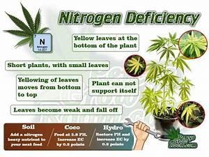 Nitrogen  U2013 Nitrogen  U2013 Percys Grow Room  A Cannabis Growers