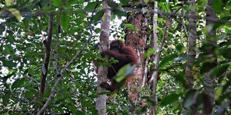hutan suaka alam pengertian contoh manfaat