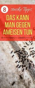 Hausmittel Gegen Ameisen Im Garten : die besten 25 hausmittel gegen ameisen ideen auf pinterest ameisen hausmittel ameisen im ~ Whattoseeinmadrid.com Haus und Dekorationen