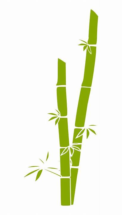 Bamboo Drawing Vector Grass Discover Clip Designs