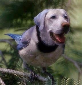 Bird Dog Quotes. QuotesGram