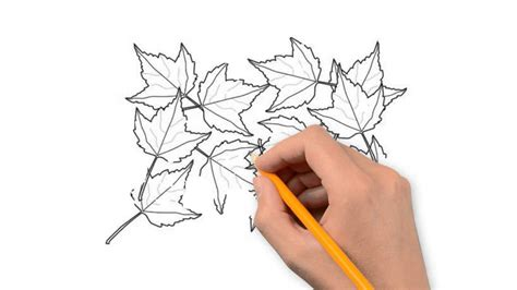 autumn leaves nature pencil  draw step  step youtube