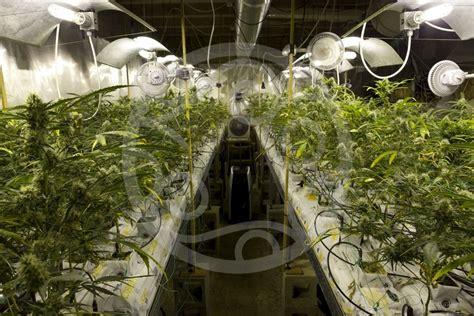 chambre de cannabis comment ventiler une culture de cannabis