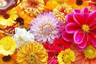 Multi Colored Flower Patterns
