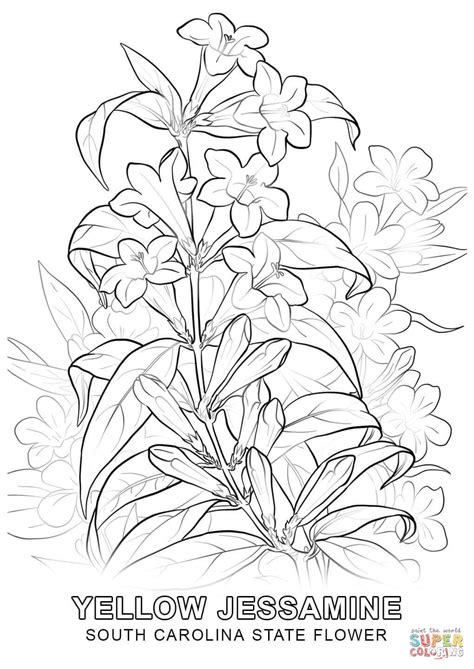 south carolina state flower coloring page  printable
