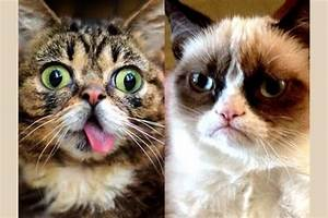 Are you Grumpy Cat or Lil' Bub