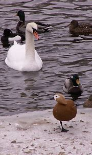 Pond at the Moscow Zoo in winter on Behance
