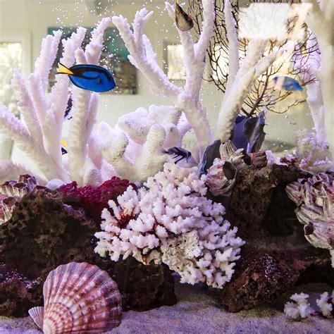types  aquariums features  benefits infinity aquarium design