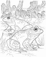 Frog Coloring Pages Frogs Animals Wildlife Spotted sketch template