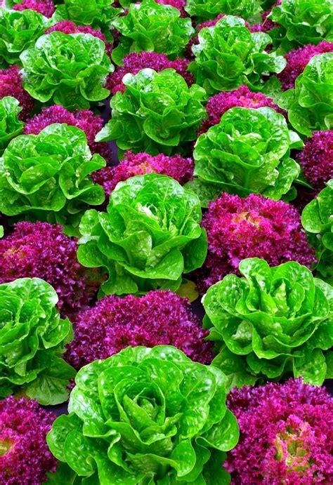 kitchen interior designs pictures 22 ideas for decorative gardens pleasure for the