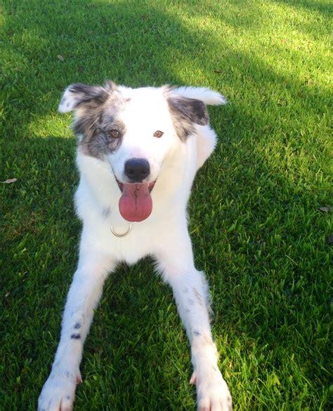austin dog training texas heeler  decide