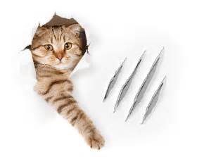 cat scratch paws need claws prevent scratching without declawing